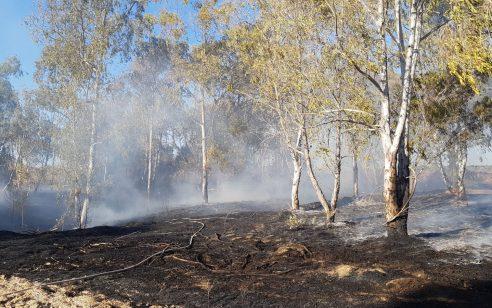 2 שריפות קוצים נגרמו מבלונים ביער בארי – צוותי כיבוי פועלים במקום
