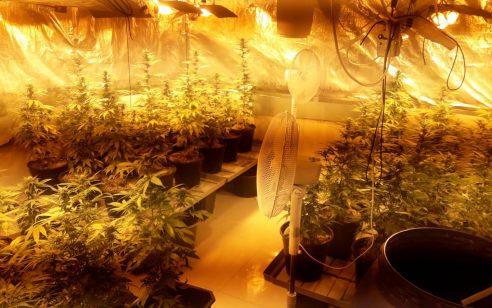 נחשפה מעבדה לגידול סמים בקריית ביאליק – 2 תושבי עכו החשודים בהפעלתה נעצרו