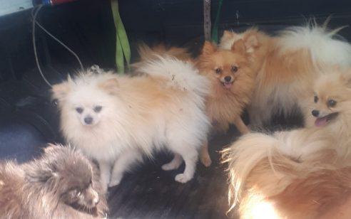 שישה כלבים שהוחזקו בתנאים קשים חולצו ממחסן סגור מהמושב עלמה כשהם סובלים ממחלה מדבקת העלולה לפגוע בבני אדם