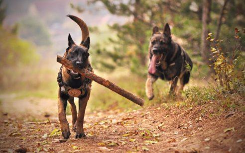 שלושה חיילים בבסיס בירנית ננשכו על ידי כלב חולה כלבת – מצבם טוב