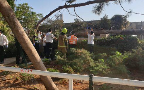 בת 19 נפצעה קשה מנפילת עץ על בית בבני ברק